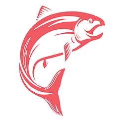 connexion-cds-salmon